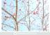 Red Blossom 2