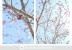 Red Blossom 3